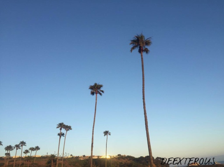 Palm trees at Malibu, California