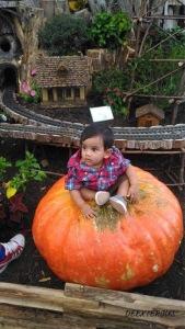 Our little pumpkin at State fair of Texas